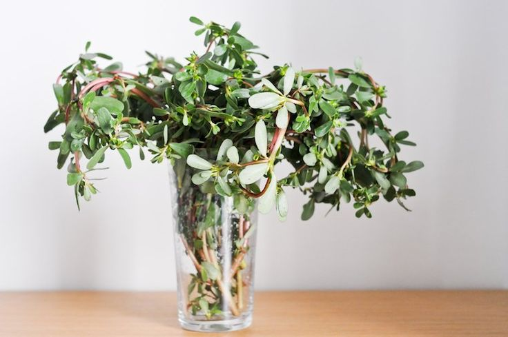 45 Things To Do With Purslane - a healthy  delicious 'weed' - and how to find/identify it is here http://www.pennilessparenting.com/2011/09/foraging-for-purslane.html
