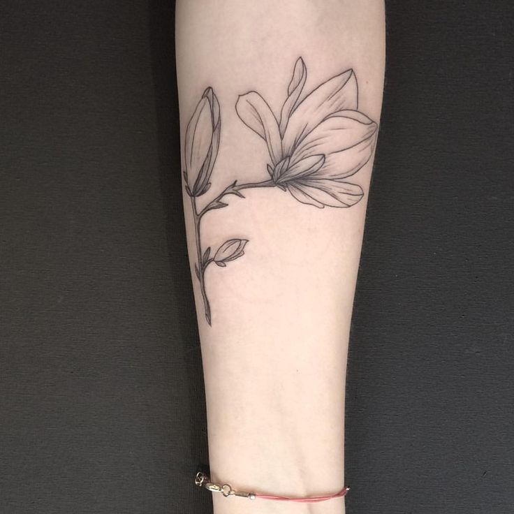 Instagram Magnolia, Flower Magnolia, Soft Tattoos, Illustration Flower, Tattoo Things, Floral Tattoo, For, Magnolias, Illustrations