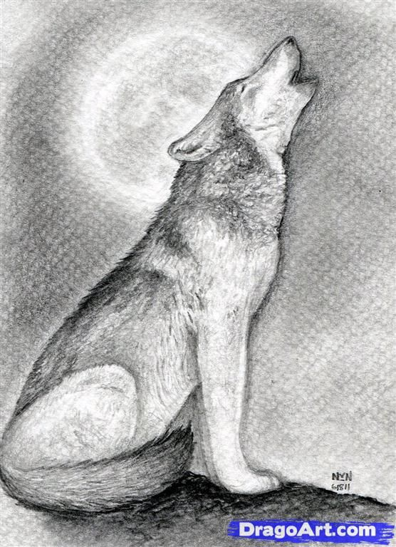 Drawing  a howling wolf, Added by finalprodigy, June 19, 2011, 9:17:53 pm