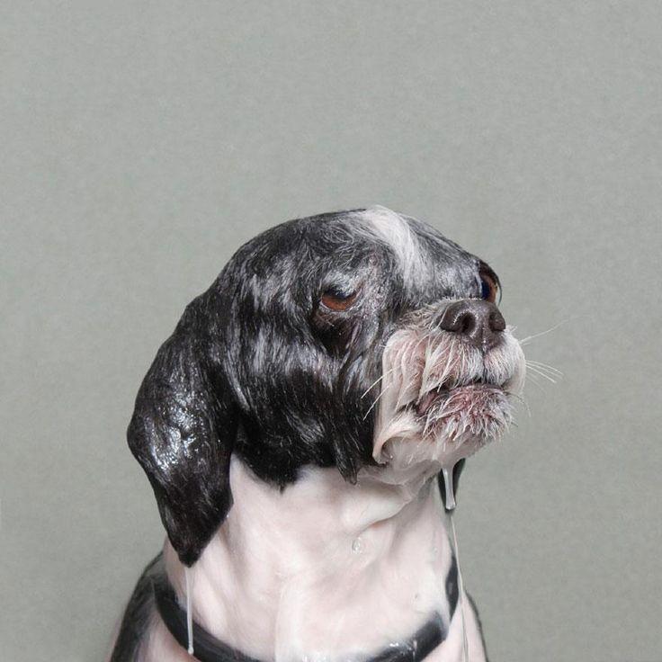 Wet Dog 6 / Sophie Gamand
