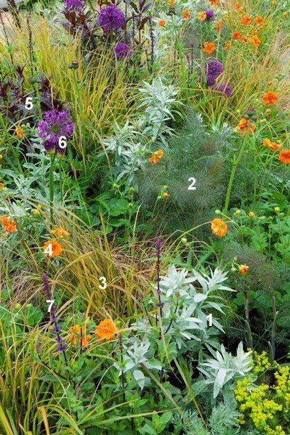 Een kant-en-klaar beplantingsplan voor 1 m² met groene, paarse en oranje planten!