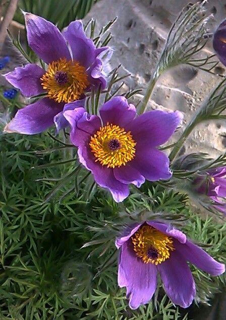 Pinterestteki en iyi 100 spring flowers grntleri iek bu pini ve daha fazlasn halinasmuk tarafndan oluturulan spring flowers panosunda bulabilirsiniz mightylinksfo