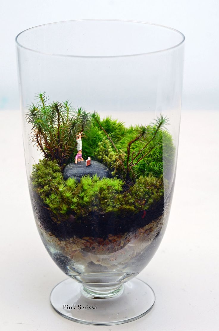 moss terrarium little people headstand apothecary. Black Bedroom Furniture Sets. Home Design Ideas