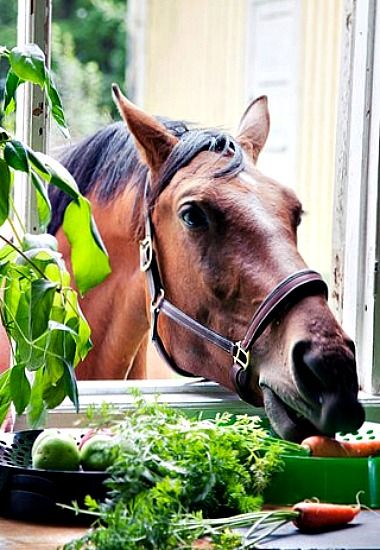 I'm sure these carrots were left for me...Sneaky horse