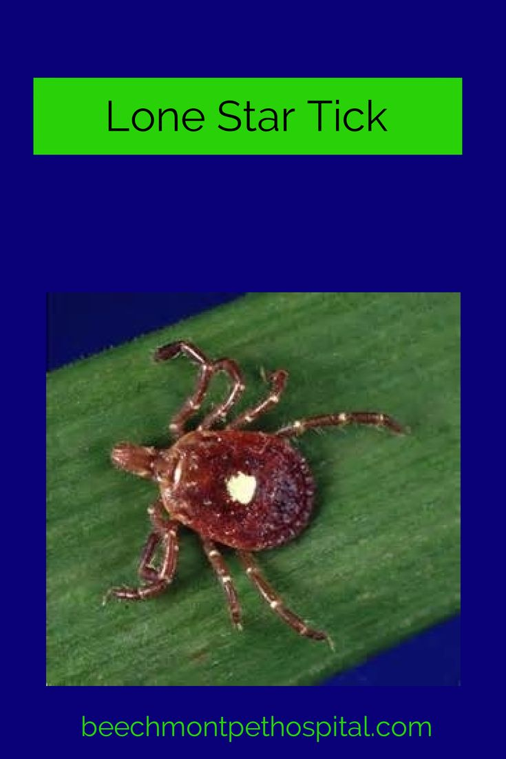 Natural Remedies For Tick Bite Fever In Dogs