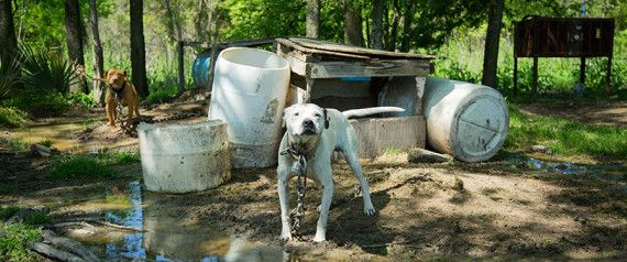 Dog Fighting Is Still A Huge National Problem, But You Might Be Able To Help