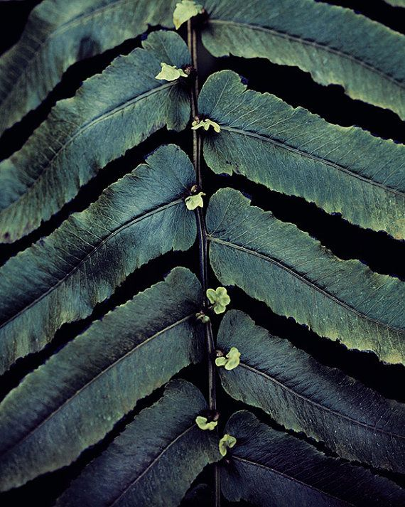 Nature Photography, Plant Leaves in Dark Blue Green Teal, Botanical Spring Photograph, Garden, Home Decor - What Plants Know on Etsy, $32.00