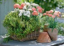 Гвоздики и травы – стильный союз для украшения балкона