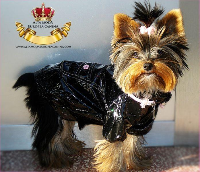 Chubasqueros para Perros Pequeños Chubasqueros para Perros Pequeños Diversos tipos de chubasqueros para perros pequeños tenesmos en stock permanente en Alta Moda Europea Canina.com Evita que tu pero