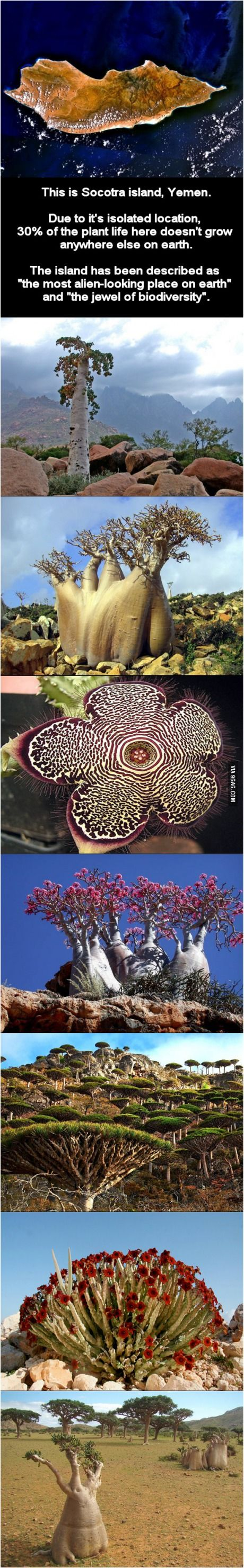 Island of Socotra and its flora. Also spelled Soqotra. A small archipelago of four islands in the Indian Ocean, part of Yemen.