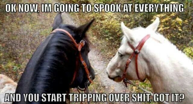 "Hahaha fuck. I remember, first lesson, my dad walked up & spooked the horse a little bit & it was like ""shit!"" ""Okay, we're fine, that wasn't expected"""