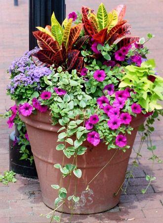 container garden combo