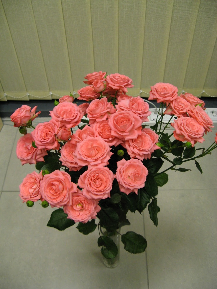 my birthday roses