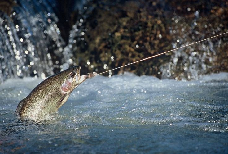 The fly-fishing lodge at Three Forks Ranch provides beautiful scenery and fishing experience like no other.