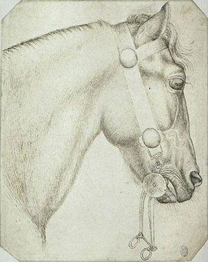 Pisanello - Testa di un cavallo (probabile studio per l'affresco del san Giorgio) - 1433-1438 circa o 1450 circa - Parigi, Louvre, Cabinet des Dessins