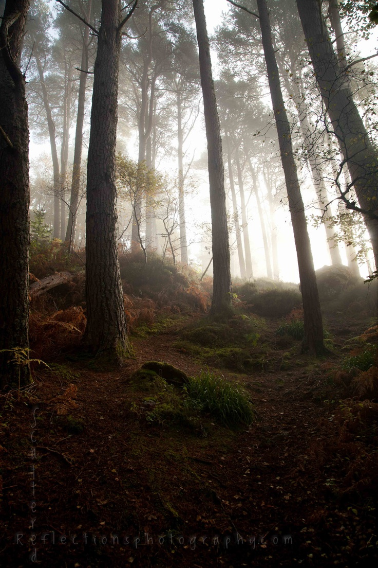 The Misty Forests of Loch Ness- Loch Ness, Scotland- Photographic Print. $40.00, via Etsy.