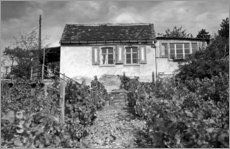 Freyburg - Weingarten-Idylle 1960