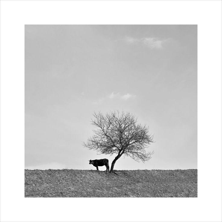 12+1 TOP černobílá fotografie - březen/duben/květen 2015, Ondřej  Růžička