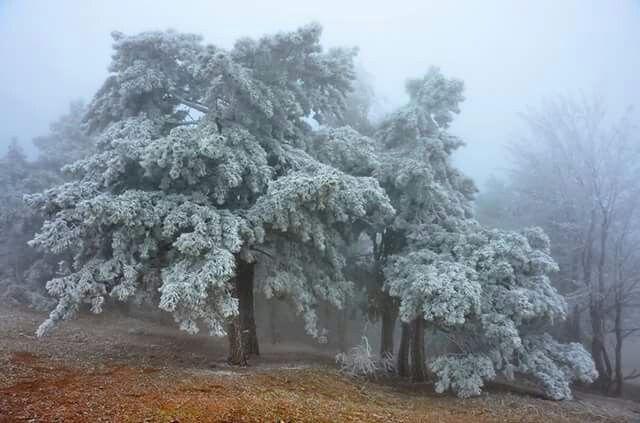 Winter by Sergey Kiselev