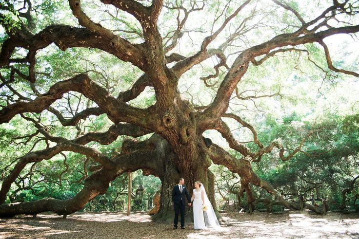 Angel Oak Tree Bride and Groom // Large Oak Tree and Bride and Groom // Charleston Oak Tree wedding day