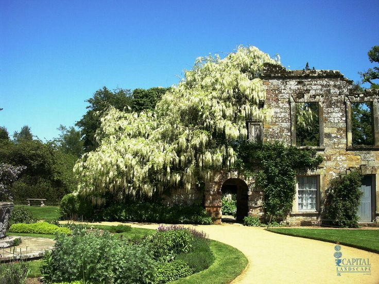 54 best Plants for Zone 9 images on Pinterest | Deciduous trees ...