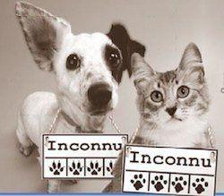 Petition · les internautes: rendre l'identification obligatoire lors d'adoption d'un animal · Change.org