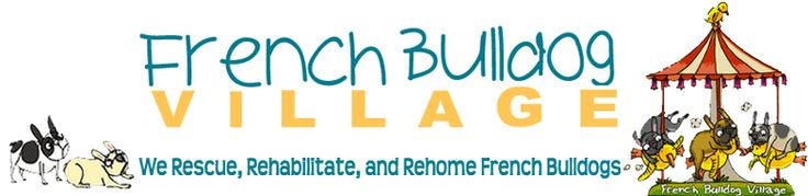 French Bulldogs available for adoption at French Bulldog Village
