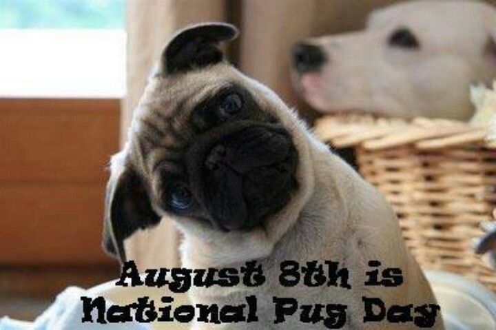 I had no idea that August 8th was National Pug Day. .who. knew??