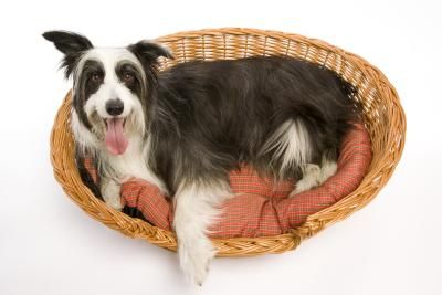 Fido not having the best smelling week? Maybe he played in the rain and then headed for his bed before you could get him dry. Maybe his bed's extra-smelly for another reason. Whatever the reason, you can rehab even the stinkiest dog bed with some heavy cleaning.