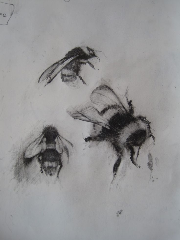 sketches of bees | Vermeer and Bridget Riley, drypoint progress and Bumble bee drawings.