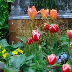 9 best harrogate spring flower show images on pinterest spring harrogate spring flower show yorkshire festival 2014 mightylinksfo