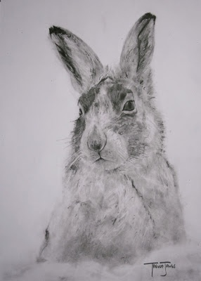 (SOLD) #48 Mountain Hare