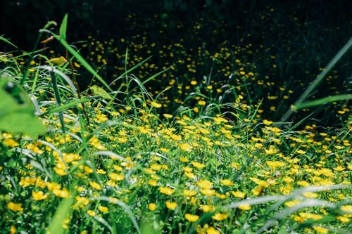 prettiest yellow flowers