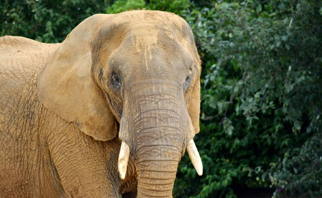 5 Easy Ways to Help This World Elephant Day:  On August 12, World Elephant Day, animal lovers around the world will come together to celebrate elephants and support a future where they're respected and protected.