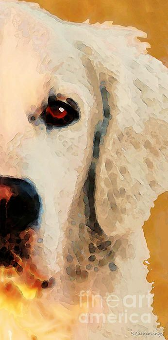 Golden Retriever Half Face by Sharon Cummings #sharoncummings #goldenretriever