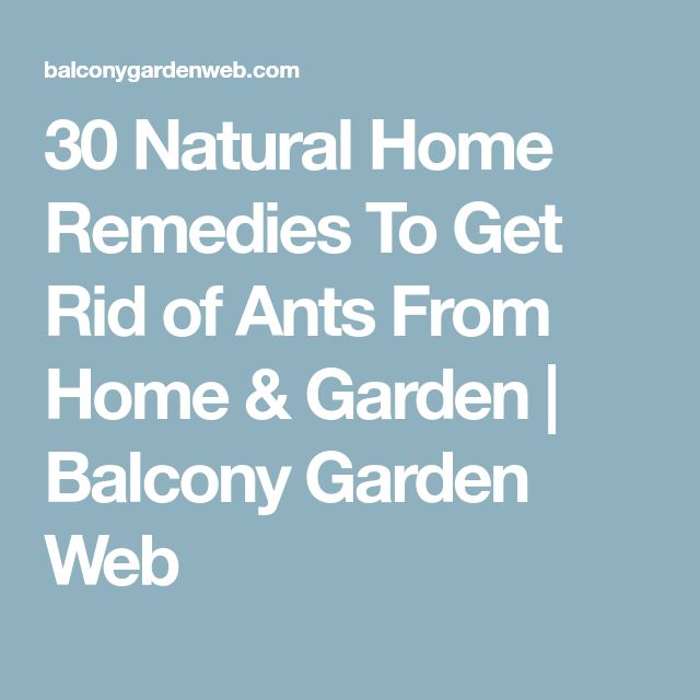 How To Get Rid Of Ants In Kitchen Cabinets: Best 25+ Ants Ideas On Pinterest