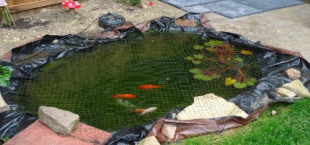 Small Outdoor Koi Pond