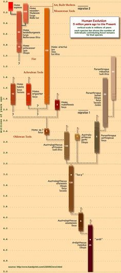 Human Evolution Timeline - I see Homo Sapiens is not connected to or descended from any other human looking species on this timeline? Why is that? And how exactly did these species produce NEW genes to be able to grow the brain to a bigger size? Mutations and Duplications do NOT grow new genes with new functions.