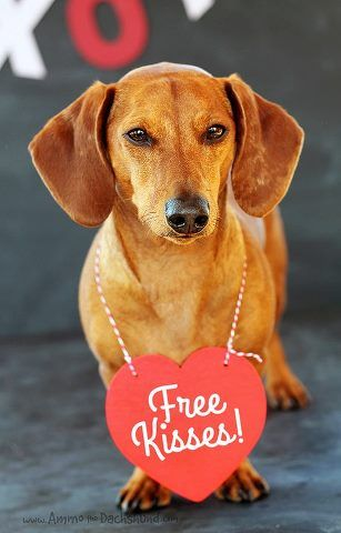 28 best valentine 39 s pets images on pinterest dogs happy - Valentines day pictures with puppies ...