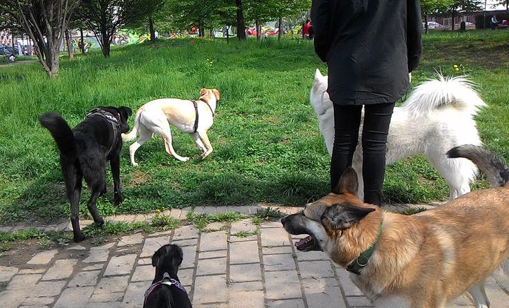 07/04/2016 - Torino con Peja, Carol, Temi e Asia
