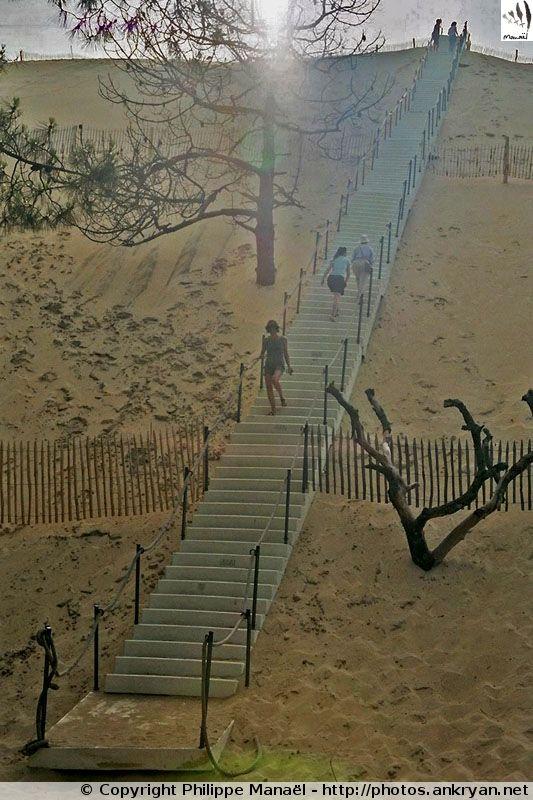 Escalier de la Dune du Pilat - Bassin d'Arcachon (France, Aquitaine, Gironde)