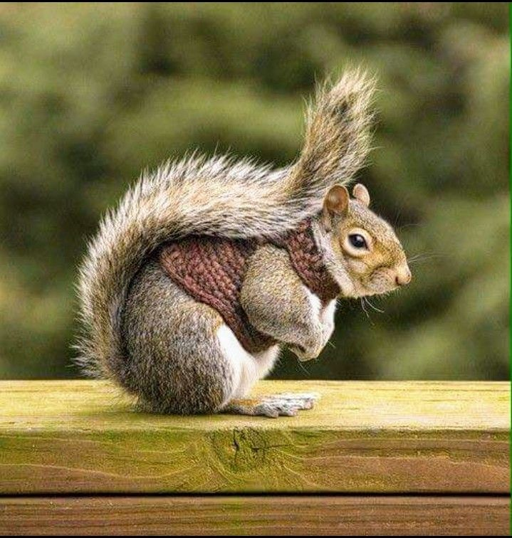Best Squirrely Squirrels Images On Pinterest Squirrels - Student befriends campus squirrels then dresses them in the cutest outfits ever