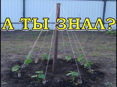Выращивание огурцов ёлочкой - YouTube