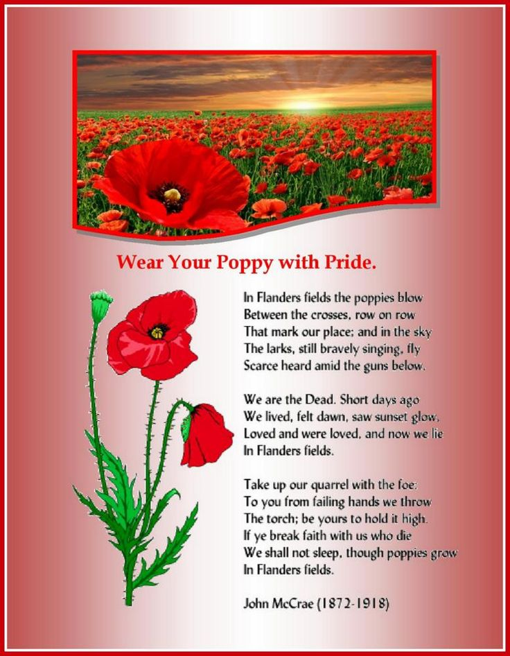 114 best vfw images on pinterest military life poppies and may is poppy month mightylinksfo