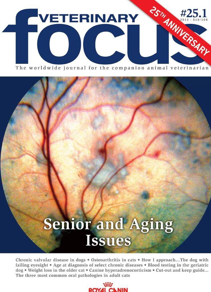#Veterinary #focus #senior #issues