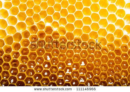 unfinished honey making in honeycombs - stock photo