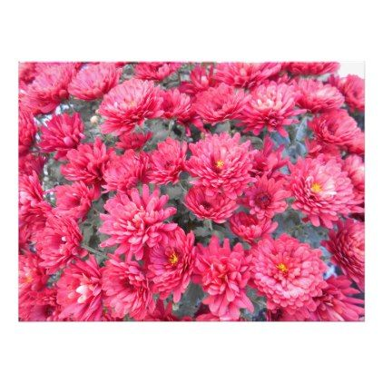 Red Chrysanthemum Flowers Photo Print - red gifts color style cyo diy personalize unique