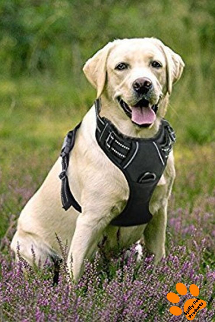 Dog Collars Harnesses Leashes Dog Harness Dogs Hiking Dogs