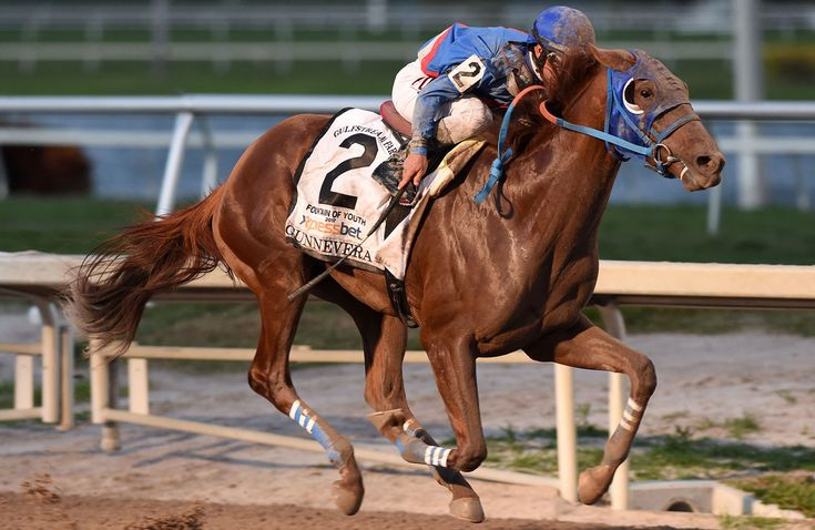 Gunnevera Contender Profile  at the Kentucky Derby. The 2017 Kentucky Derby is the 143rd renewal of The Greatest Two Minutes in Sports. Live odds, betting, horse bios, travel info, tickets, news, and updates from Churchill Downs Race Track.