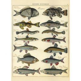 Een mooie vintage druk met vissen.